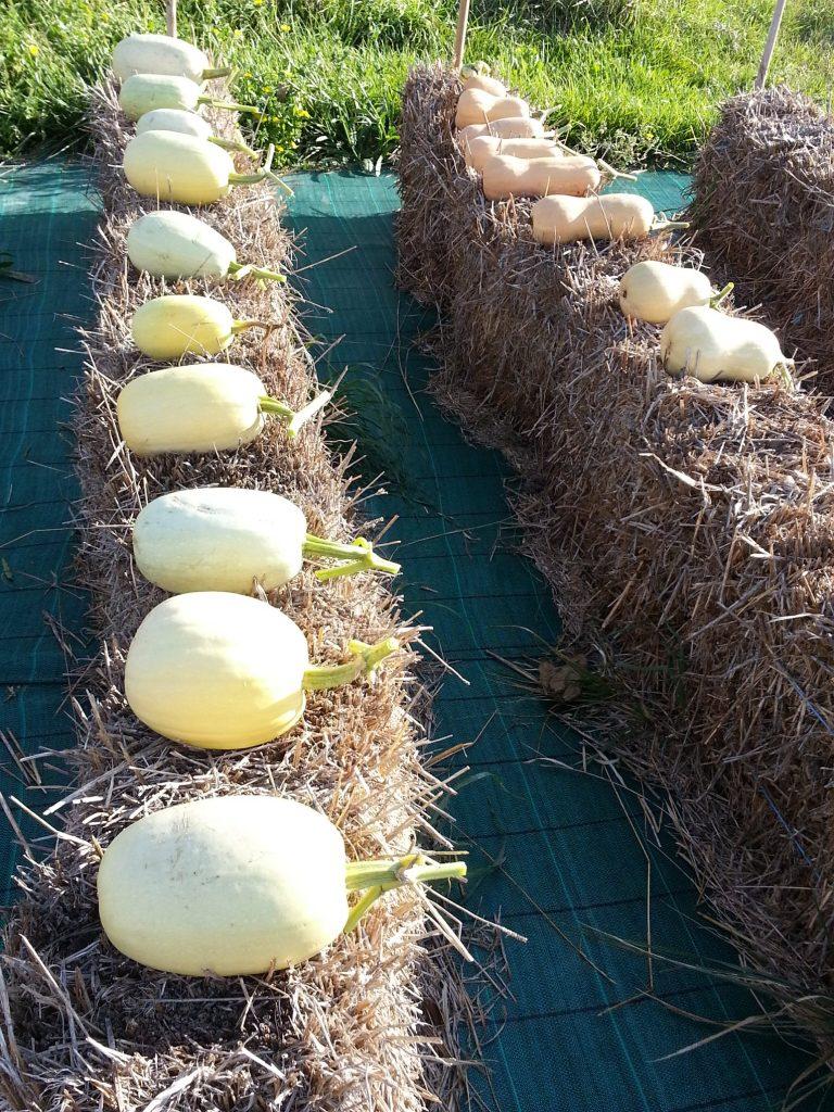 Bales harvest