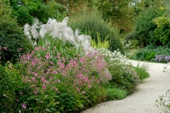 Miscanthus sinensis x 'Memory' and Japanese anemones