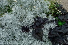 creative plant combinations