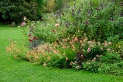 kaffir lily and salvias