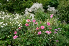 Cosmo, dahlias and miscanthus